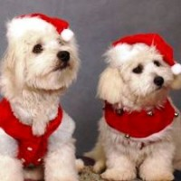 Image from Murdoch Uni Vet Hospital gives advice for pet owners over the holidays